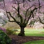Learn about Washington Park Arboretum.