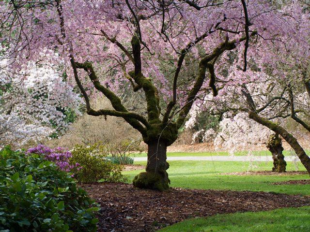 About The Arboretum The Arboretum Foundation