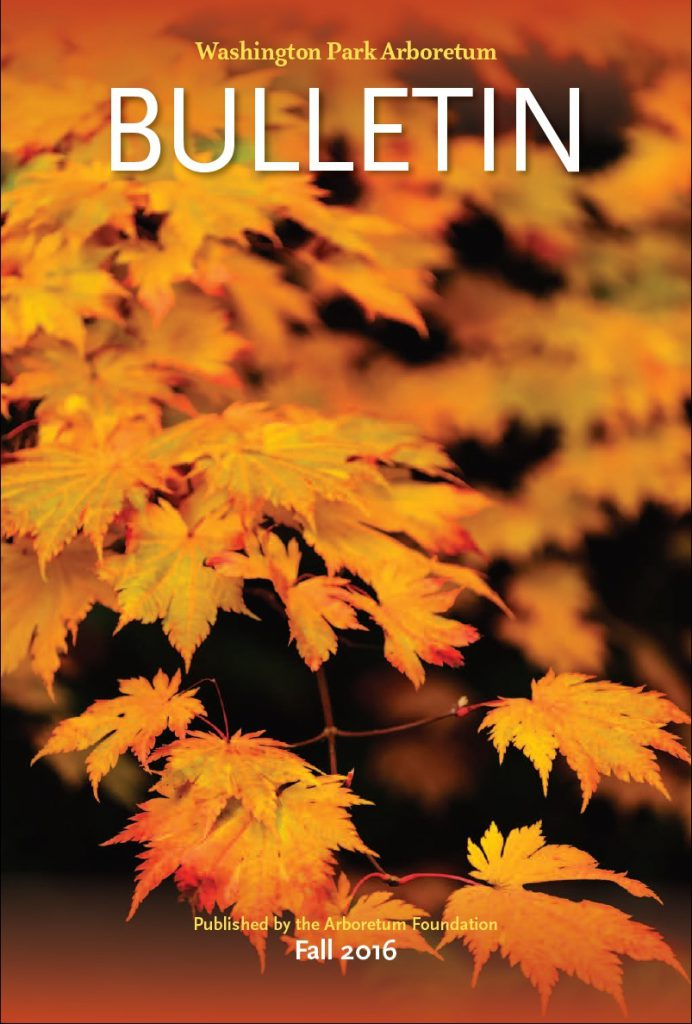 Cover photo by Dean Forbes: Japanese maple in the Arboretum.