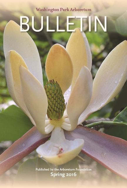 Cover of the spring issue, featuring Magnolia officinalis var. biloba in bloom.