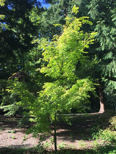 Honor a loved one with a commemorative tree in the Arboretum.