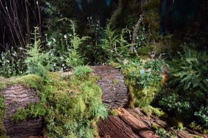 """The Hoh: America's Rain Forest,"" our diorama-like display celebrating our state's ancient temperate rain forest."