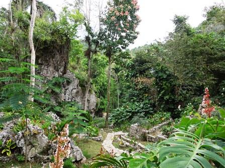 Garden Tour Of Cuba The Arboretum Foundation