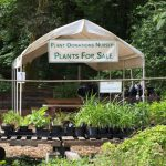 Plant Donations Nursery Wish List
