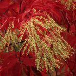 Arboretum Scene: The Stunning Sorrel Tree