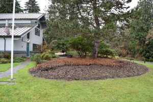 Dense shrubbery was removed from the north side of the Visitors Center to discourage loitering.