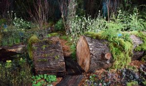 """See """"The Hoh,"""" our multi-award-winning display at the NW Flower and Garden Show this week (Feb 17 to 21)."""