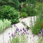 Bulletin Article: A Summer-Dry Garden