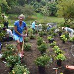 Seattle Garden Club Helps Plant Centennial Garden
