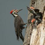 Birds in the Arboretum