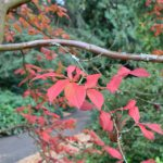 New Plantings in the Arboretum: Year in Review