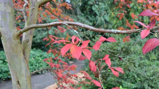 New Plantings in the Arboretum
