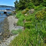 Greening a Shoreline Garden