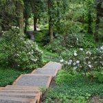 Catalytic Gift Will Fund Restoration of Rhododendron Glen