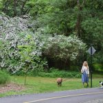 Arboretum Loop Trail Wins State Award
