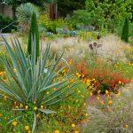 Creating a Hardy Desert Garden