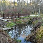 Revitalizing Arboretum Creek