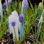 Plant Sale Cancelled, Earth Day Work Party Postponed & Other Updates